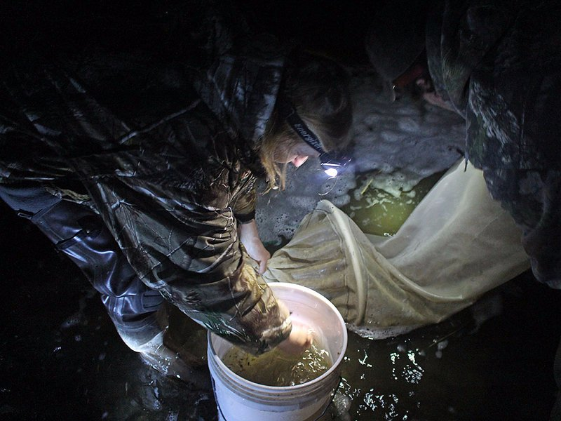 Fishing for Elvers in Maine